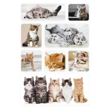 72x poesjes/kittens stickertjes voor kinderen