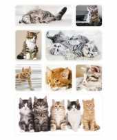 24x poesjes kittens stickertjes voor kinderen