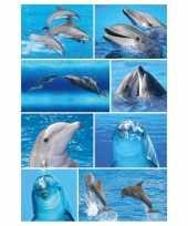 72x dolfijn stickertjes voor kinderen