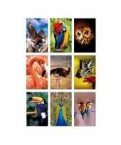 Speelgoed 3d stickers van vogels